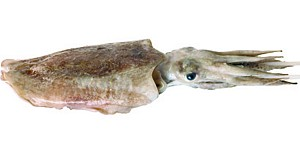Zeekat